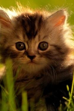 Katten en poezen Wallpapers Iphone