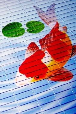 Vissen Wallpapers Iphone