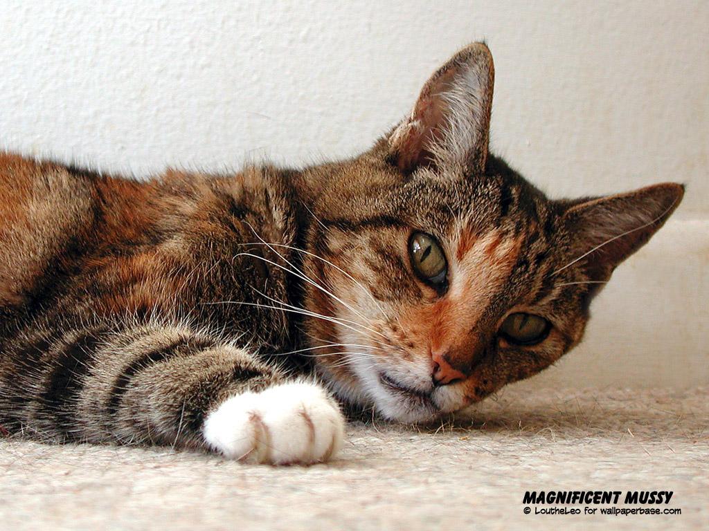 Katten Wallpapers