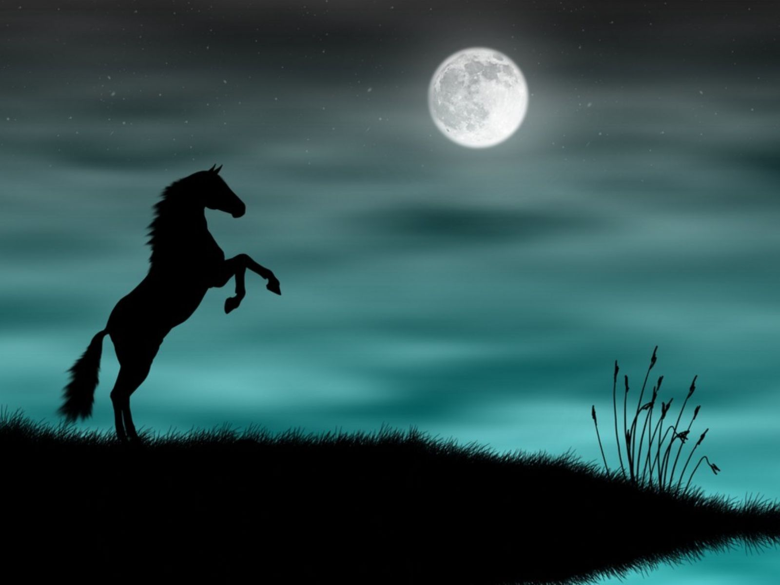 http://www.animaatjes.nl/wallpapers/wallpapers/paarden/animaatjes-paarden-35151.jpg
