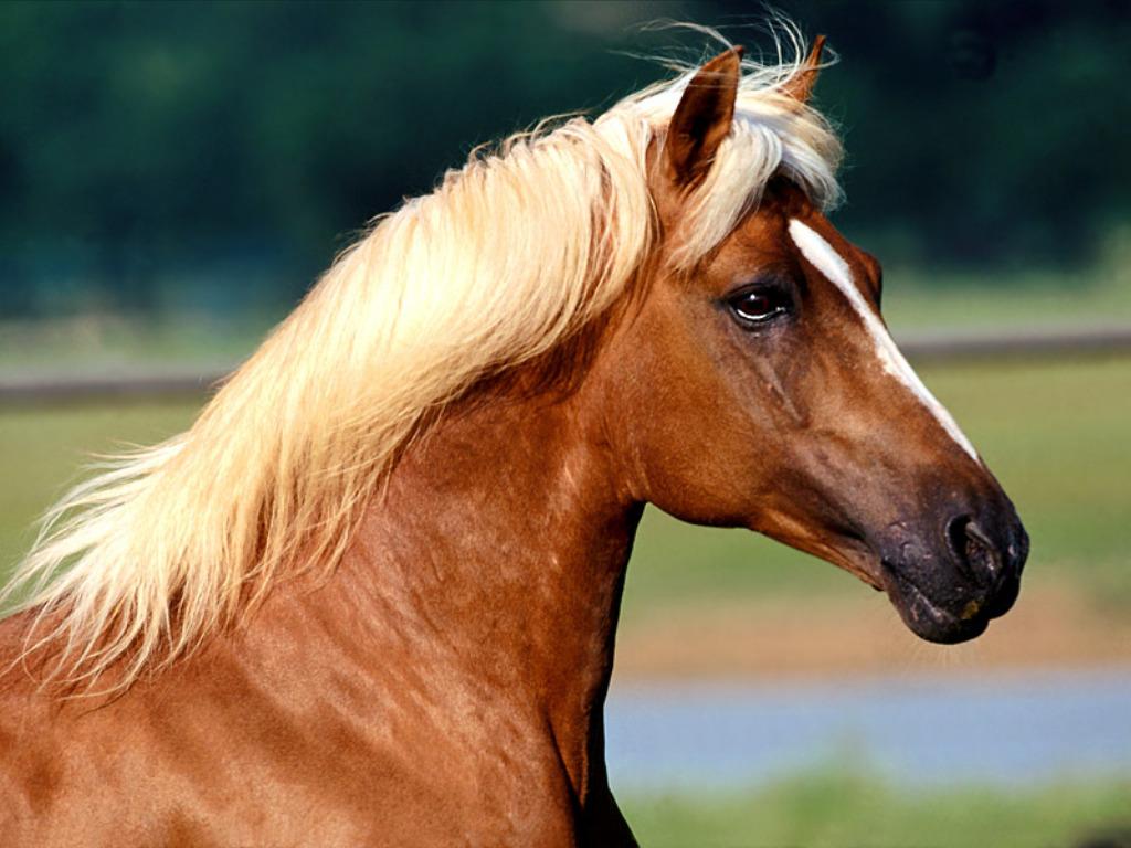 Paarden Wallpapers