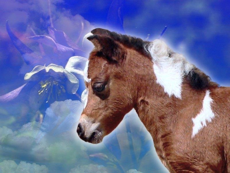 Paarden Wallpapers 187 Animaatjes Nl