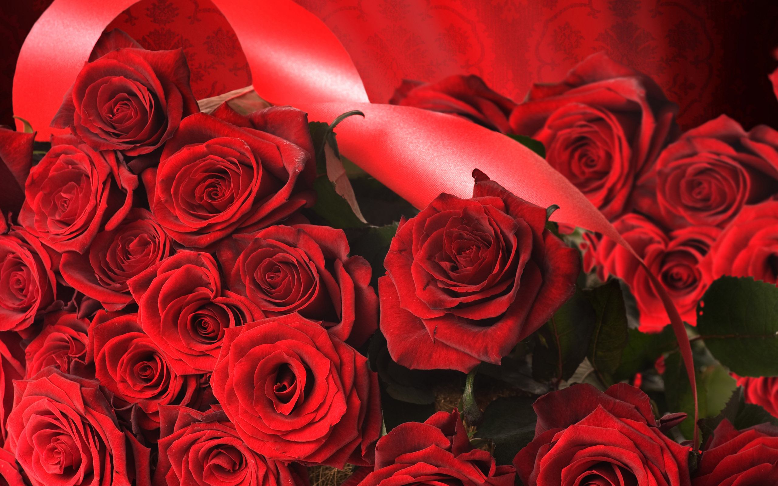 Rozen wallpapers - Red rose flower hd images ...
