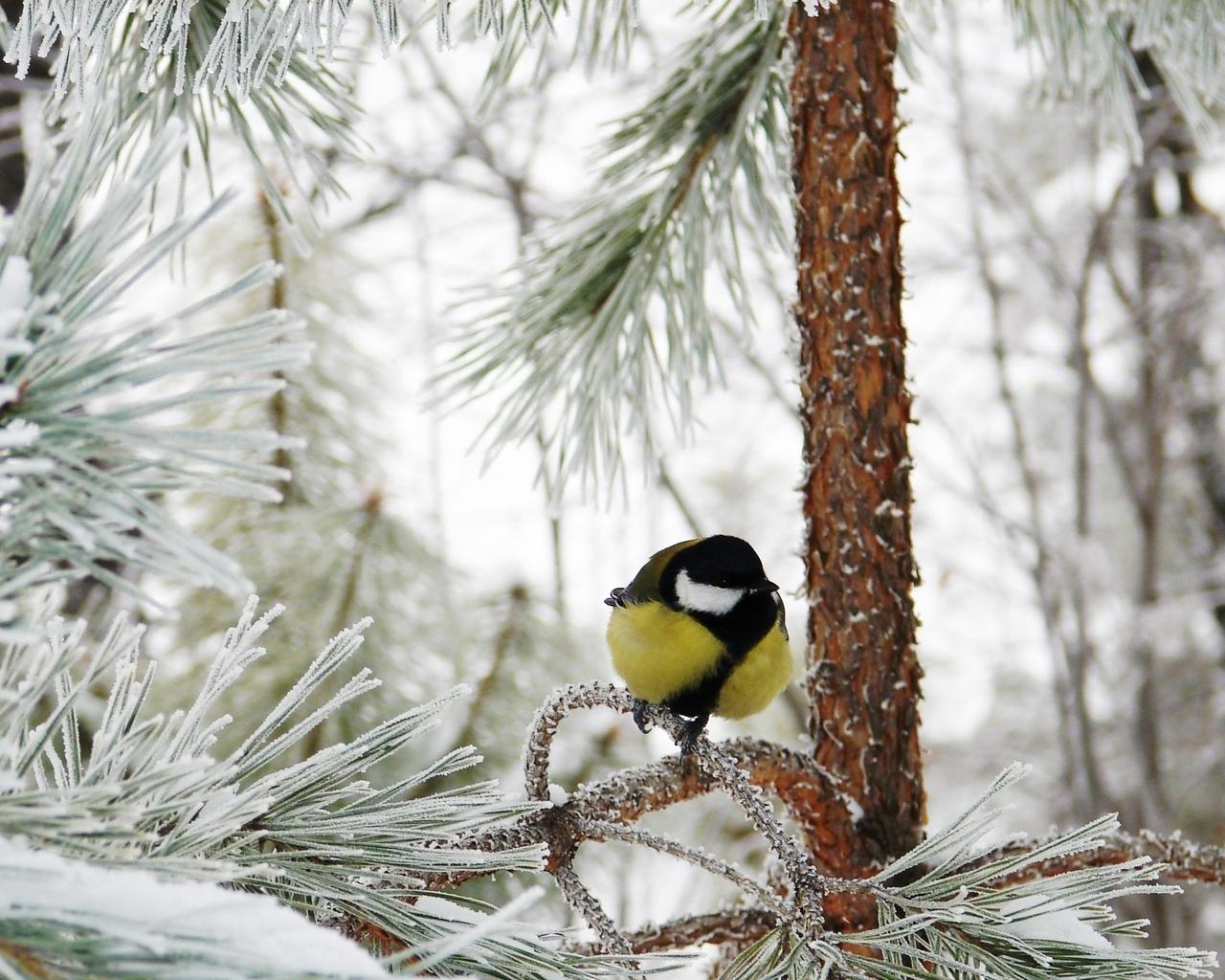 s1600 winter achtergronden winter - photo #28